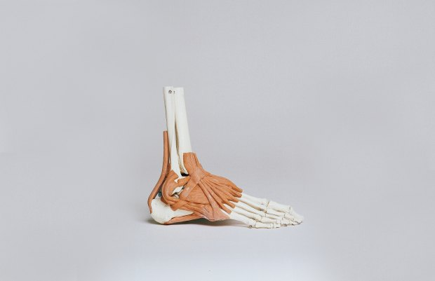 anatomia pie
